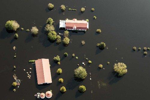 مزرعة خنازير في نيو بيرن بولاية نورث كارولاينا محاطة بمياه الفيضان، في 21 سبتمبر 2018