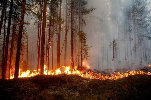 حريق في كاربولي، السويد، في 15 يوليو 2018.