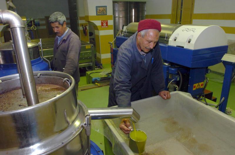 مزارعان في معصرة لإنتاج زيت الزيتون في تونس