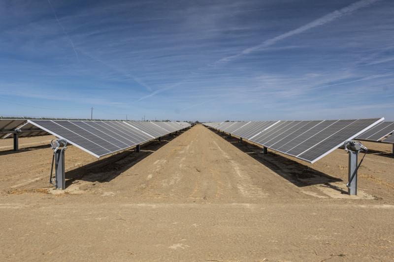 تحل الألواح الشمسية محل بعض المحاصيل في مزرعة وولف في هورون