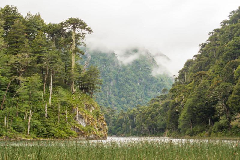 غابة فالديفيان المطيرة المعتدلة في تشيلي