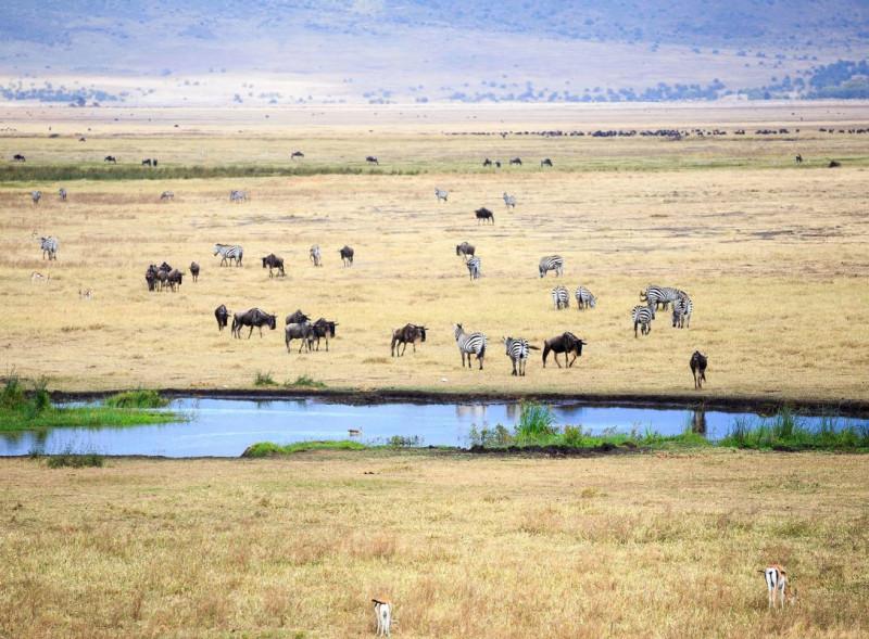غزال طومسون، والحيوانات البرية، والحمار الوحشي تتجمع بالقرب من حفرة المياه في فوهة نجورونجورو في تنزانيا
