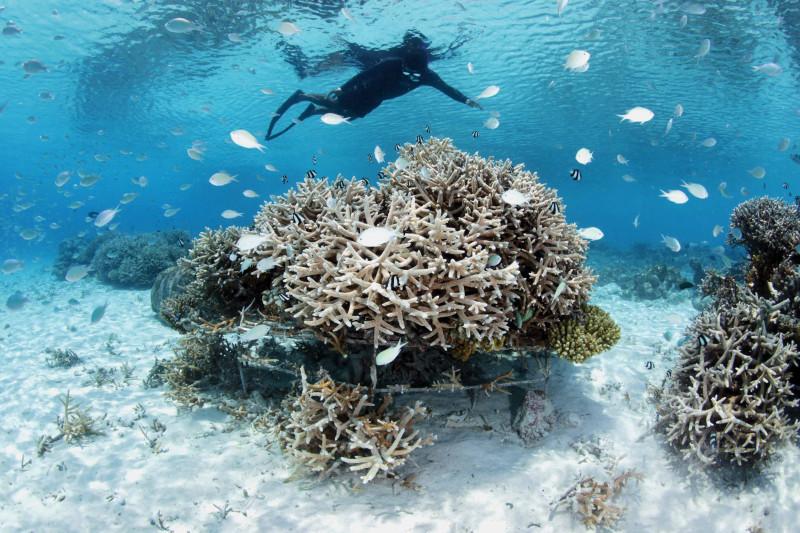 """الغوص قرب فندق """"فور سيزونز لاندا غيرافارو"""" في المالديف"""