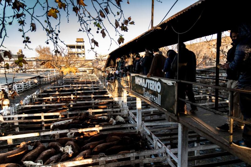 """يقوم المشترون بفحص الماشية في موقع """"لينيرز"""" على مساحة 84 فداناً، والمتواجد في قطعة من الأراضي الريفية التقليدية الأرجنتينية، ضمن حدود العاصمة"""