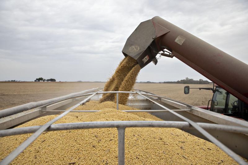 أسعار فول الصويا والذرة تشهد ارتفاعات كبيرة نتيجة الطلب الهائل في الصين