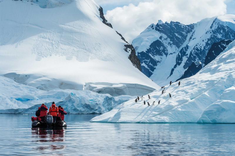 طيور البطريق في خليج بارادايس ، أنتاركتيكا