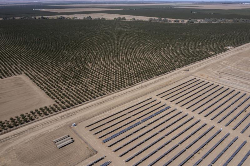 حقل جديد من الألواح الشمسية بجوار بستان الفستق في مزرعة وولف في هورون