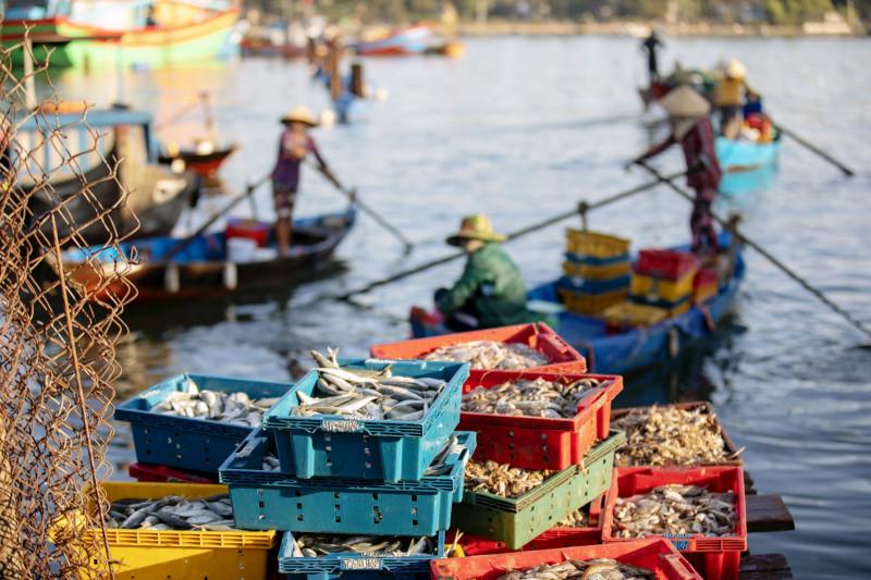 أسماك تم صيدها حديثاً في سوق السمك بمقاطعة كوانغ نام، فيتنام.