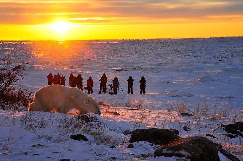 """رحلة سفاري لالتقاط صور للدب القطبي مع """"تشرتشل وايلد""""."""