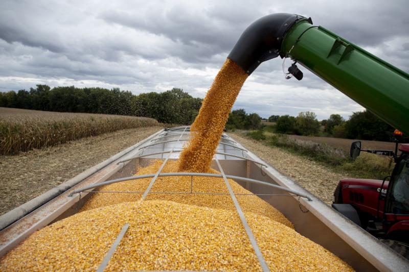 آلة تملأ شاحنة بمحصول الذرة أثناء موسم الحصاد في برينستون بولاية إلينوي الأمريكية